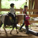domaine des chimères poneys 1